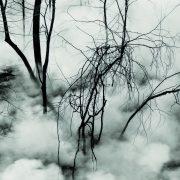 Jill Metcoff Photography